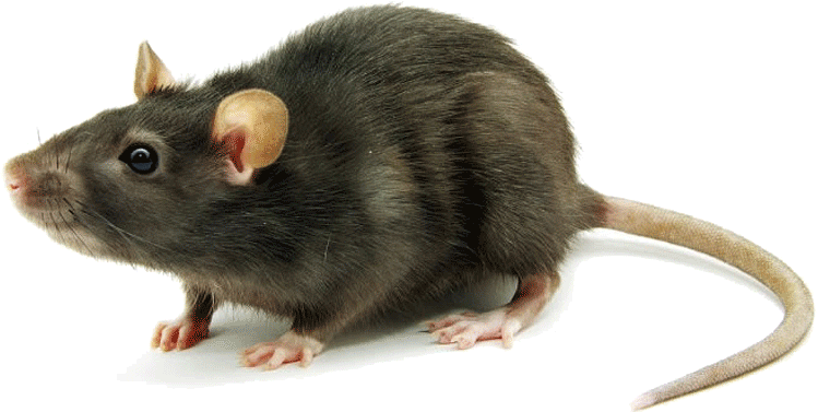 Lassa fever: Nigeria's death toll rises to 110