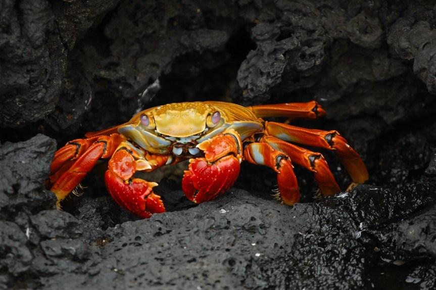 Detektivatbeit um Krabbe Kunibert; der lange Weg zur Diagnose