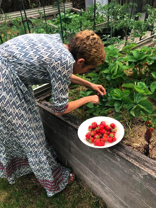 Delphine Remy dans son potager cueillant des fraises