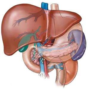 Everything you eat, drink, inhale, or put on your skin must be processed by your liver.