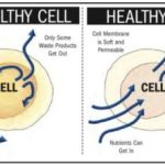 healthy cell vs unhealthy cell