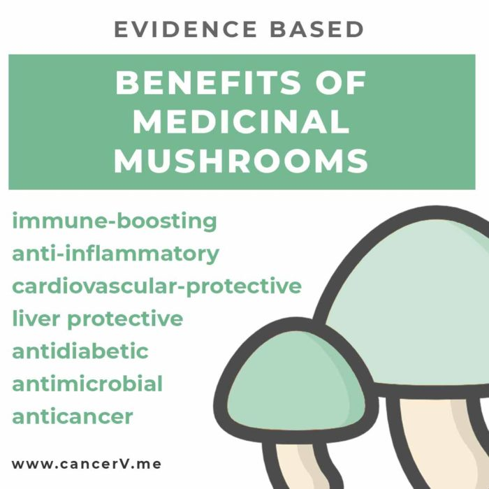 Benefits of medicinal mushrooms for cancer include antimicrobial, anti-inflammatory, immune-boosting, cardiovascular-protective, anti-diabetic, liver protective, anticancer