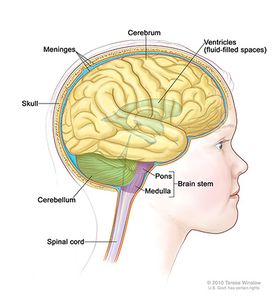 DIPG Cancer (Kids Brain tumor) Survival Rate and Symptoms