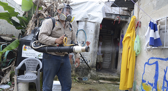 qroo trabajadores mosquitos