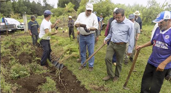 reforestacion michoacán