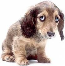 sad-dog