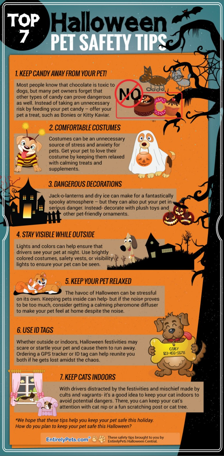 halloween-pet-safety-tips_54342f1fc31ec_w1500