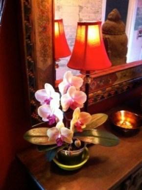 Namaste orchid