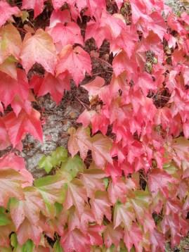leaves1l