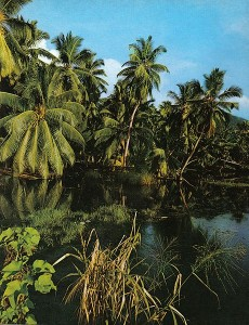 Palmiers d'où est extrait l'acide caprylique