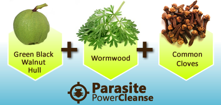 wormwood cloves walnut hulda clark parasite herbs