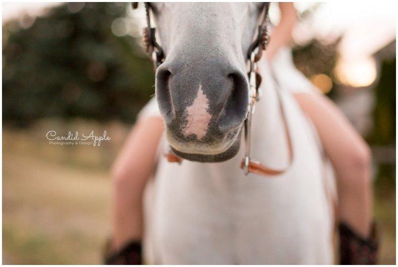 kelowna-equine-photographer_0028