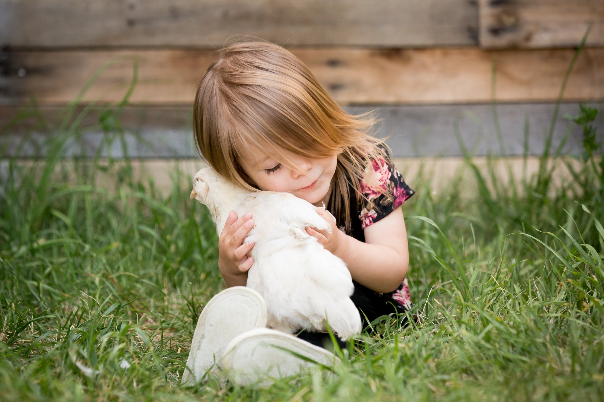 A little girl snuggling with a white chicken