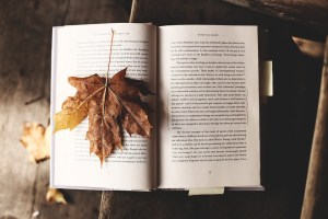 Literature Nature Fall Read Knowledge Autumn Leaf