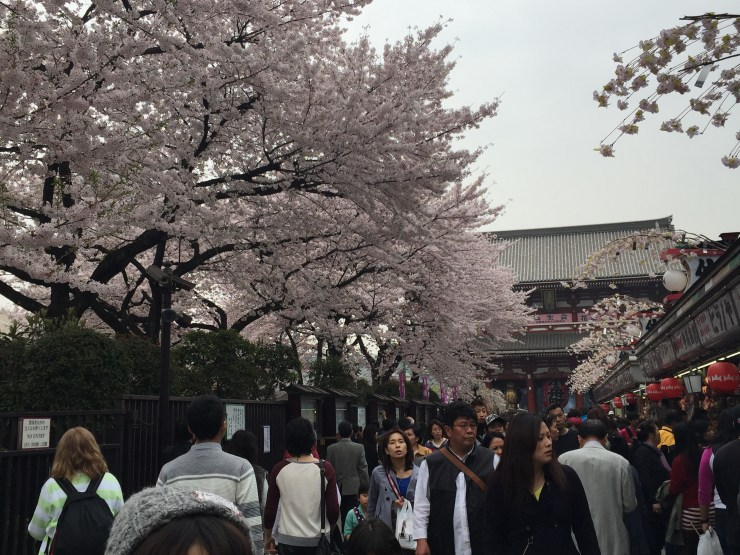 Things to do in Tokyo 2