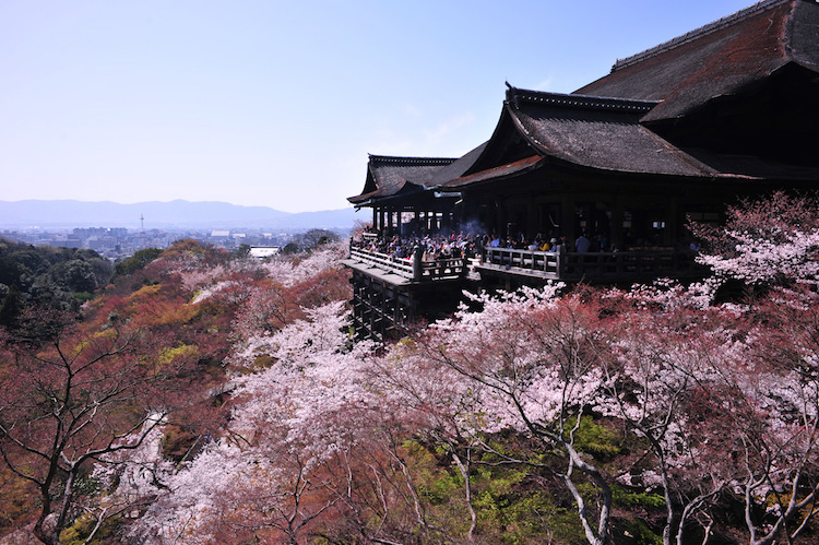 top 10 cherry blossom spots in japan 1