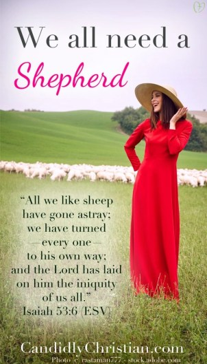We all need a shepherd