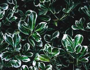 using-plants-create-home-enhanced