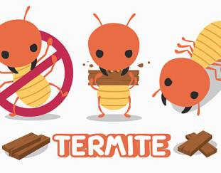 3-tips-for-termite-prevention-ideas