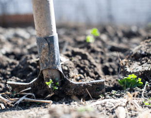 5-easy-maintenance-tips-to-improve-your-garden