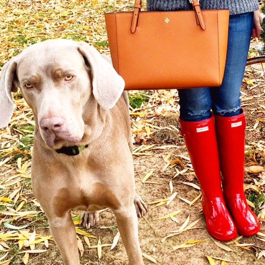 Just a few of my favorite things (besides my Weimaraner Fred)! Loving my Tory Burch Small York Tote, AG Skinny Jeans and Military Red Hunter Tour Boots. My essentials are available at the Shopbop Spring Sale!