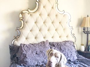 fred the weimaraner laying on hooker furniture sanctuary bed with georgina bedding on candace rose anderson blog