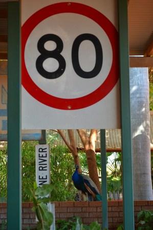 Swan 80 km.jpg