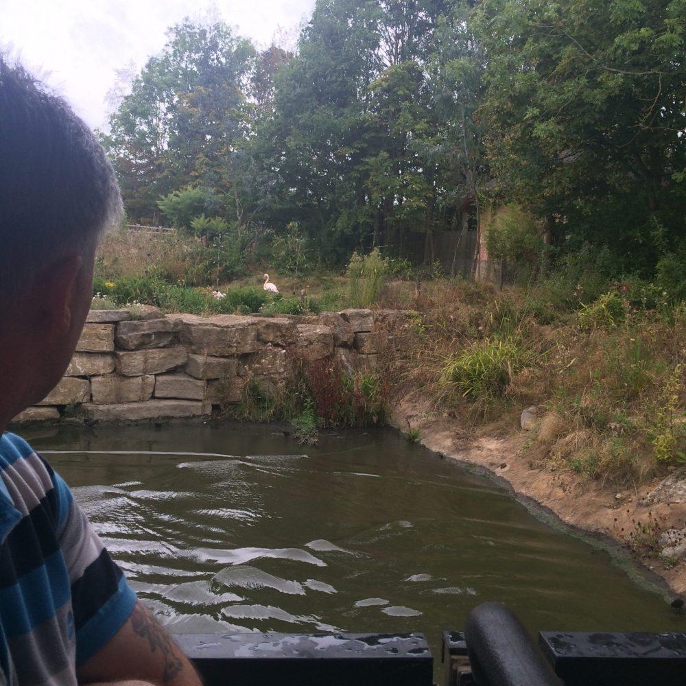 chessington flamingos on the zufari ride