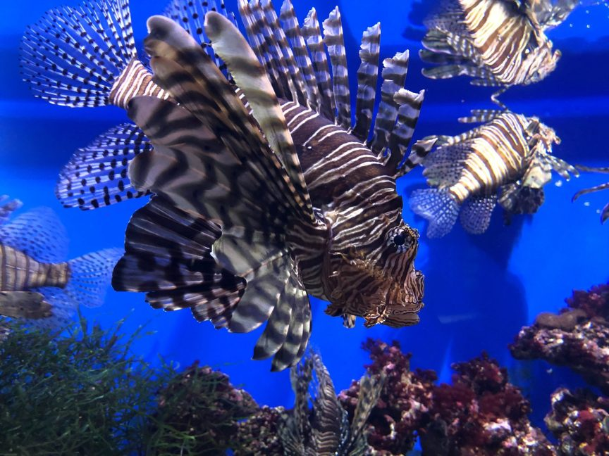 fish, barrier reef, honeymoon, scuba