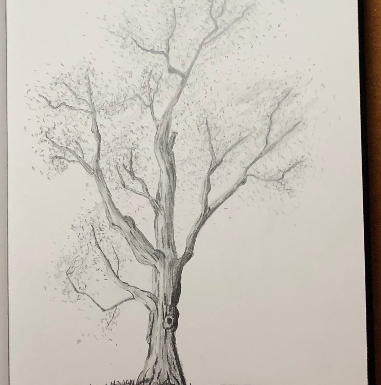 Sketch-Oak & Evergreen Trees
