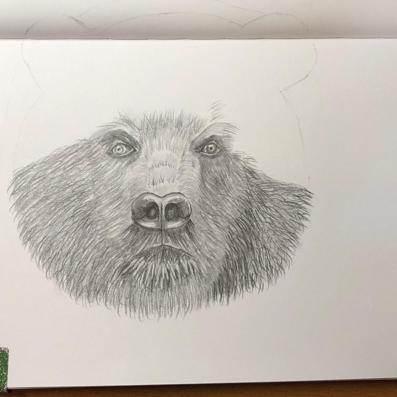 Sketch-Bear