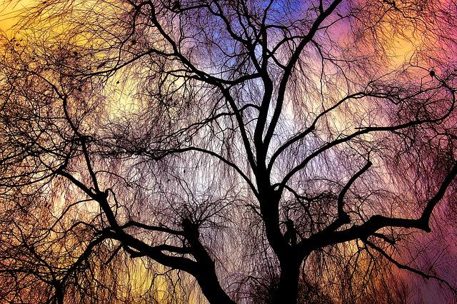 Weeping Willow – Haiku