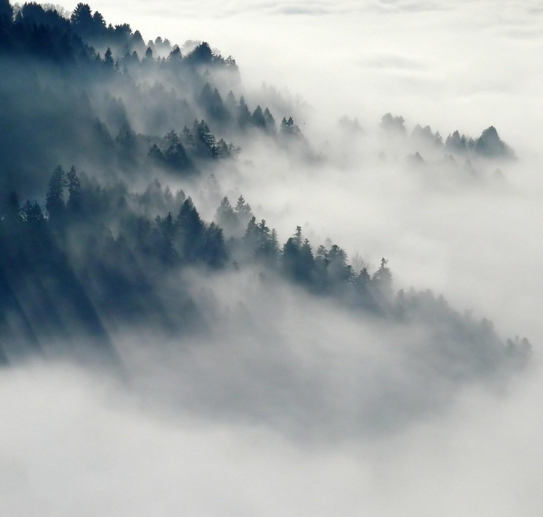 Fog – Haiku
