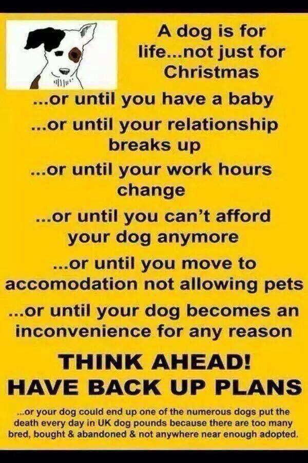 What is a dog for