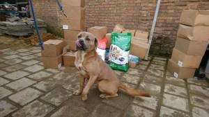 Alpha Feeds Donation & Cane Corso