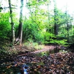 Walk along the creek
