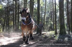 cavalos_sintra2