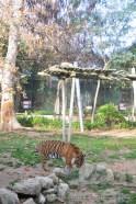 zoo2015-008