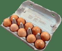a carton holding 10 eggs