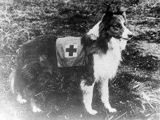 Una foto del 1909 della Croce Rossa italiana