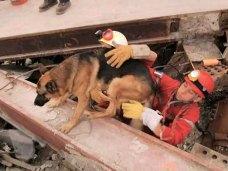 Non solo valanghe. I cani possono aiutare gli uomini anche in scenari di rovine, terremoti, disastri in città.