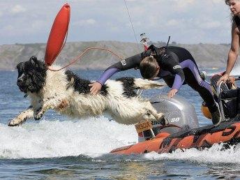 Whizz, terranova inglese impiegato dalle pattuglie tra il Bristol Channel e il fiume Severn che ha salvato nel corso della sua carriera nove vite umane (e anche un altro cane) dall'annegamento. Alla sua scomparsa, nel marzo 2016, gli hanno dato una medaglia postuma.