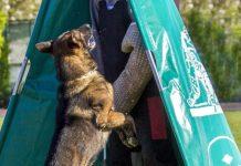 addestramento cane ud