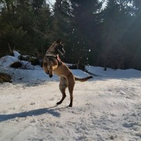 Canima - Just Go - Berger Belge Malinois