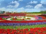 Dubai Miracle Garden (19)