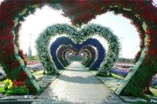 Dubai Miracle Garden (30)