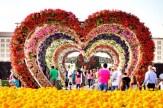 Dubai Miracle Garden (33)
