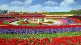 Dubai Miracle Garden (36)