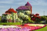 Dubai Miracle Garden (4)