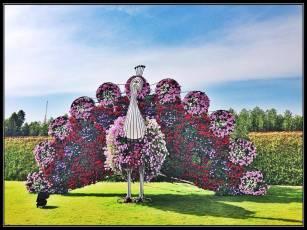Dubai Miracle Garden (42)